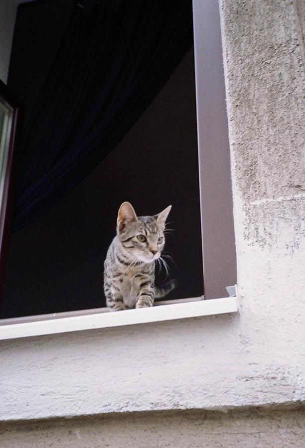 Glanz Wien Lichterwaldt katzen
