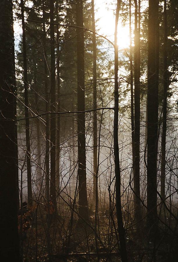 lichterwaldt innsbruck photography wald