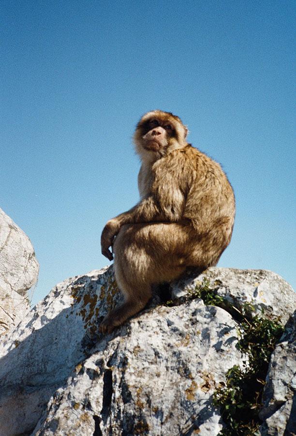 lichterwaldt gibraltar tourist